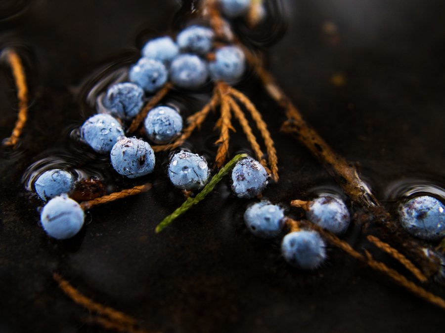 Cedar berries floating in a puddle.